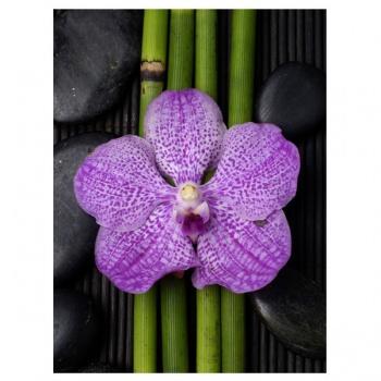 Obraz na plátně - fialová orchidej s bambusem