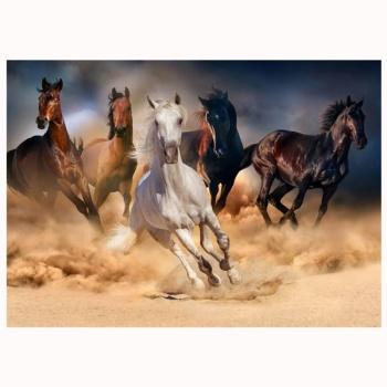 Obraz na plátně - kůň
