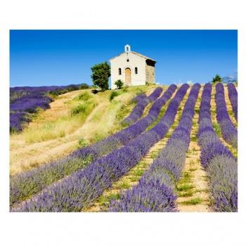 Obraz na plátně - levandulové pole