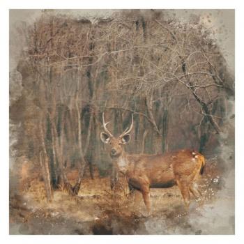 Obraz na plátně - jelen
